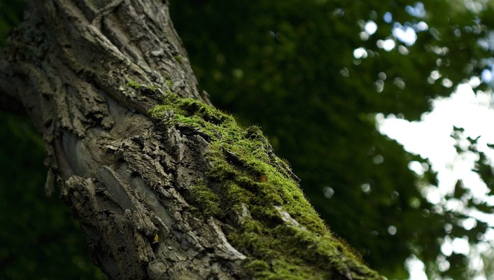 Bark depth of field macro moss nature wallpaper