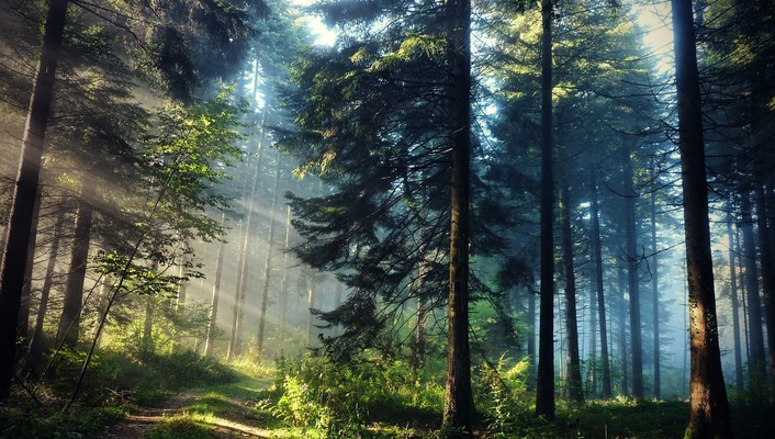 Trees forests plants sunlight hdr photography natural wallpaper