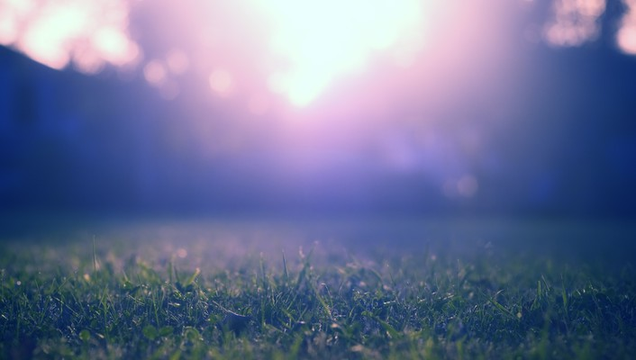 Grass ground light wallpaper