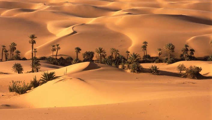 Landscapes nature desert oasis wallpaper