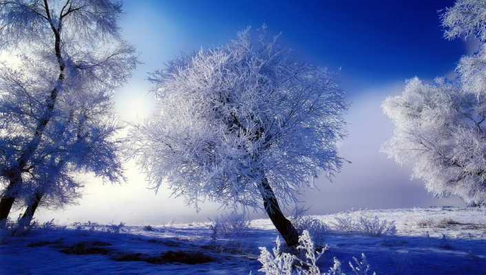 Skyscapes snow trees wallpaper