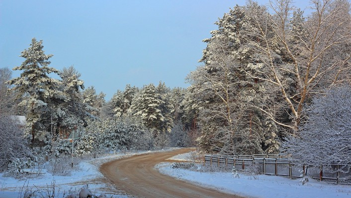 Winter road through the forest wallpaper