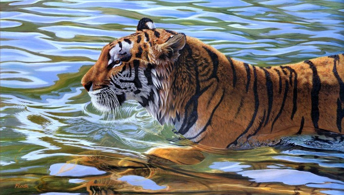Animals tigers water wallpaper