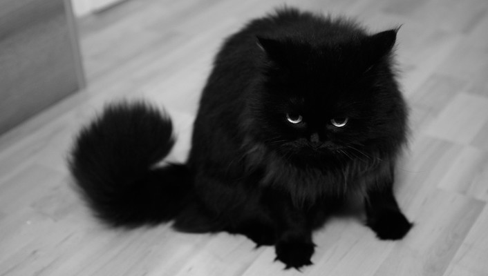 Animals black and white cats eyes fur wallpaper