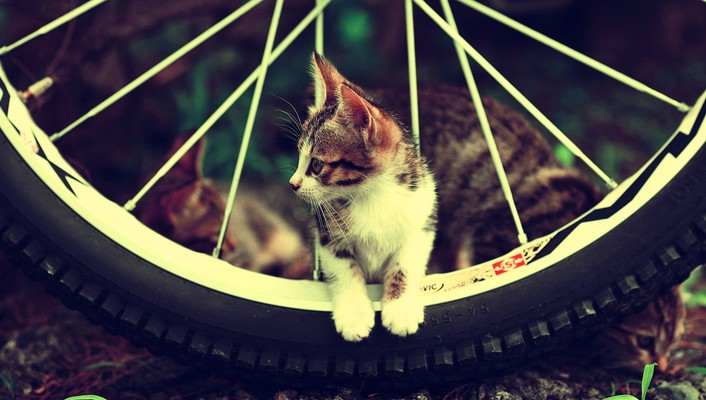 Cats motorbikes wheels wallpaper