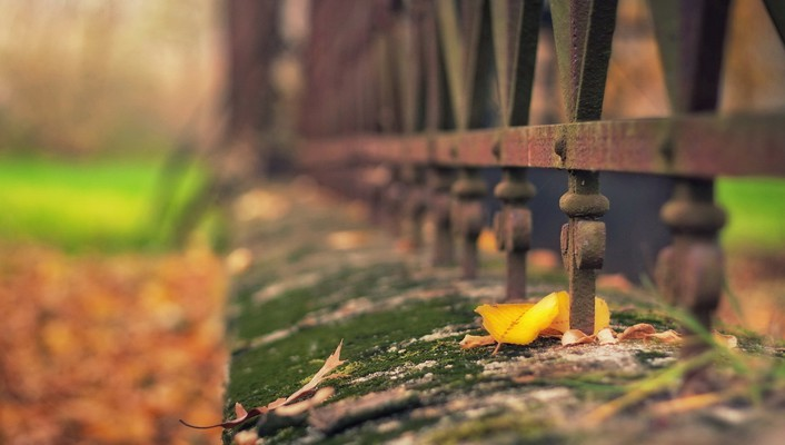 Depth of field fences moss wallpaper