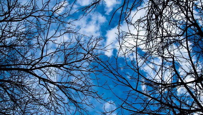 Blue skies branches clouds trees wallpaper
