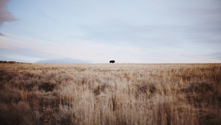 Animals bison landscapes nature outdoors wallpaper