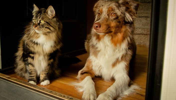 Cats dogs wallpaper