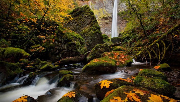 Trees autumn (season) leaves waterfalls wallpaper
