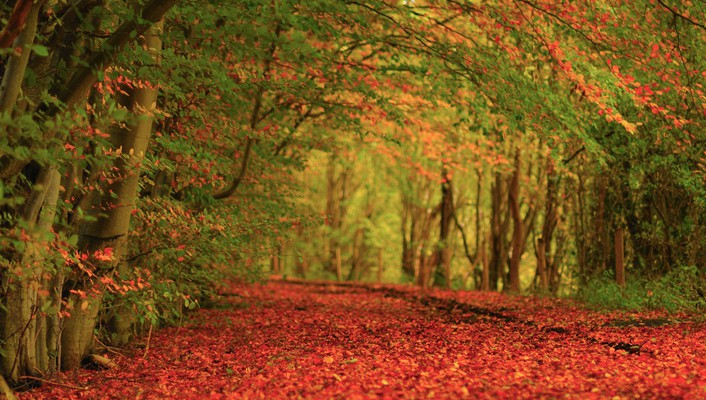 Autumn forests green leaves red wallpaper