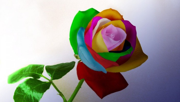 Multicolor flowers wallpaper