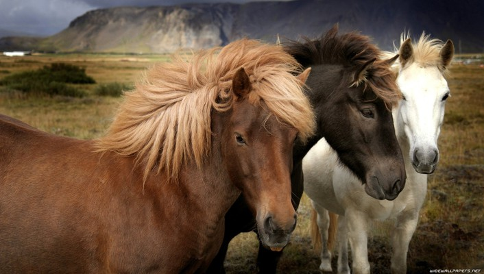 Animals black horses white horse wallpaper