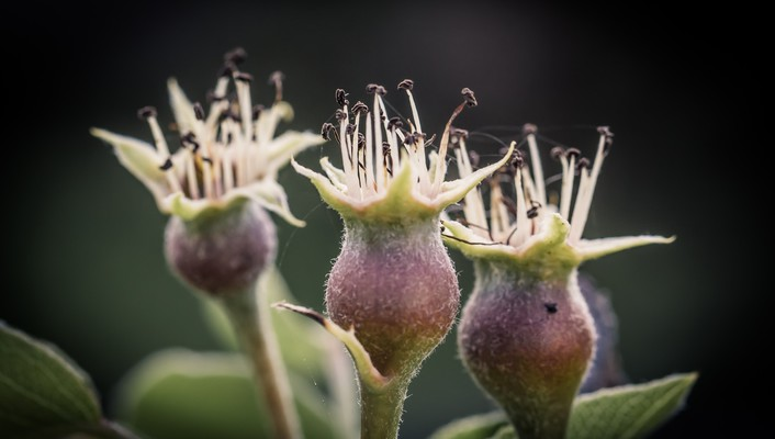 Thistles buds flowers insects macro wallpaper