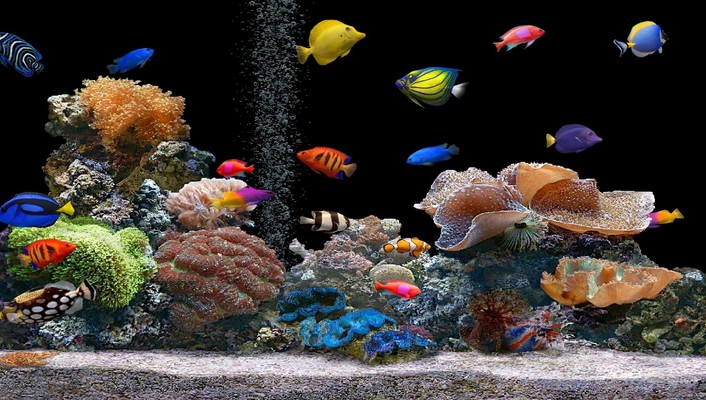 Screen savers aquarium fish plants wallpaper
