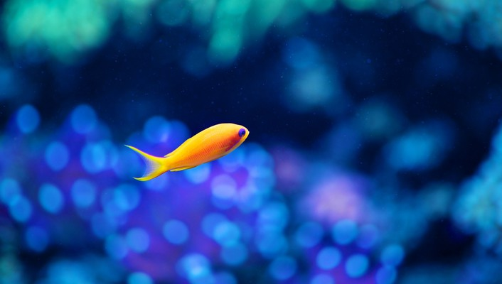 Seattle aquarium bokeh fish underwater wallpaper
