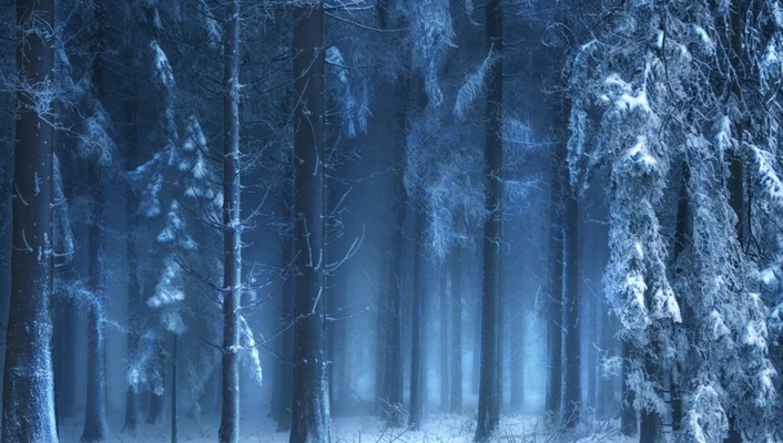 Mysterious forest in winter wallpaper