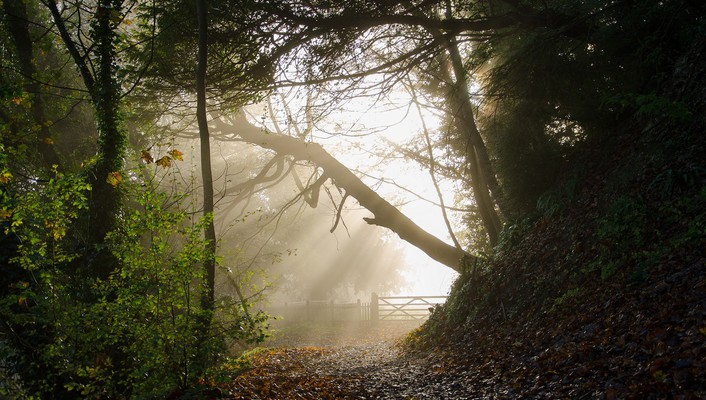 Light nature trees fences forest wallpaper