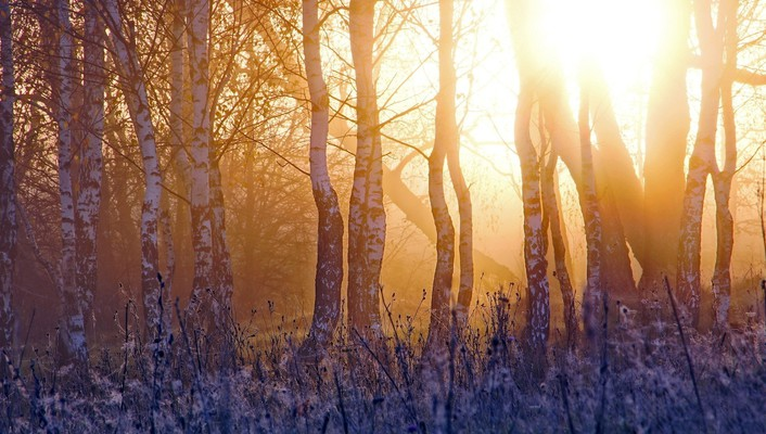 Sun forests landscapes morning sunlight wallpaper