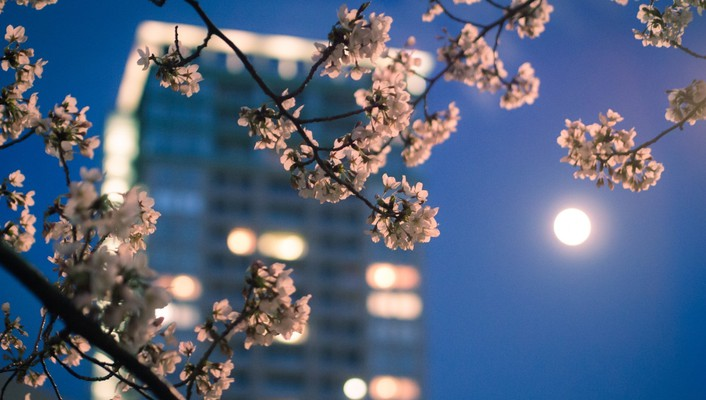 Blossoms blurred bokeh nature skyscrapers wallpaper