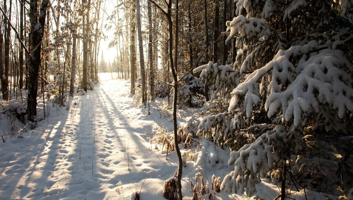 Forests snow trail trees wallpaper