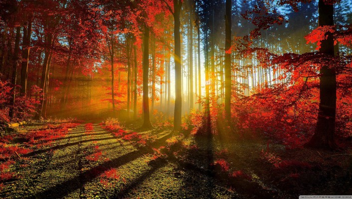 Nature red forest sunlight roads leaf autunm wallpaper