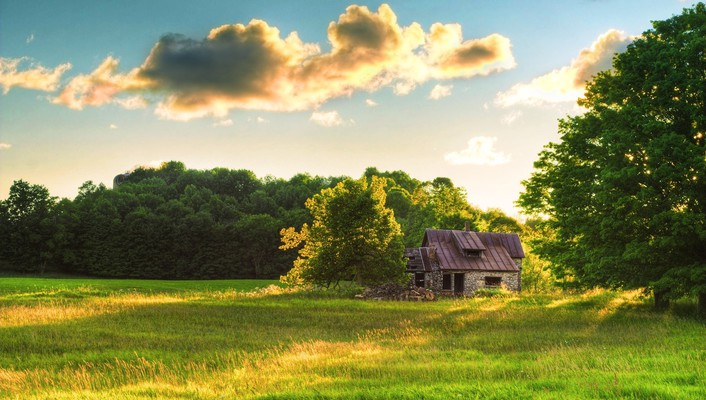 Fields nature skyscapes trees wallpaper