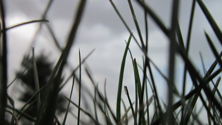 Grass skyscapes wallpaper