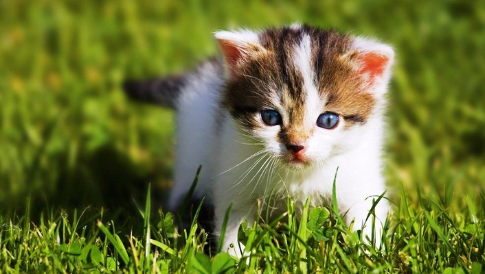 Animals baby kittens wallpaper