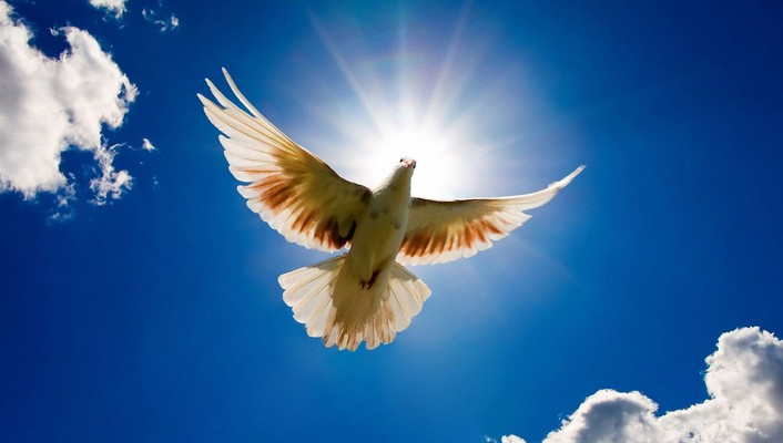 Doves flying nature wallpaper
