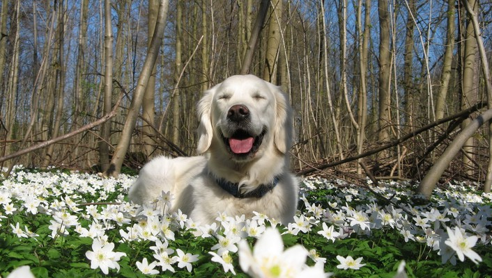 Animals dogs nature white flowers wallpaper