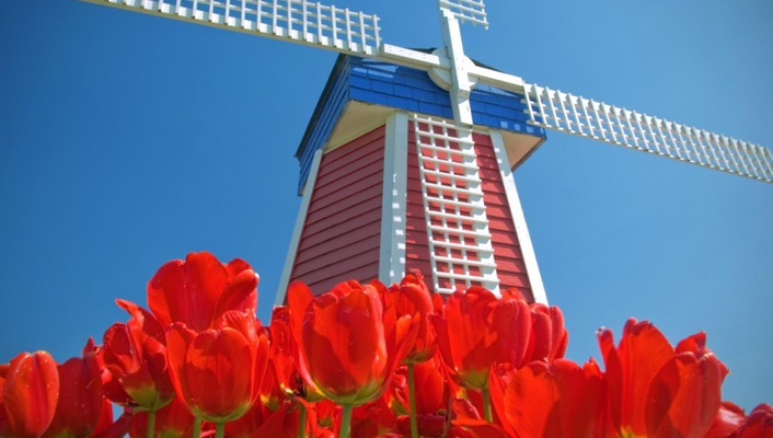 Amsterdam blue skies red flowers tulips windmills wallpaper