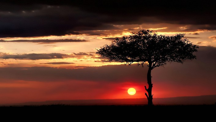 Sun landscapes nature sunset trees wallpaper