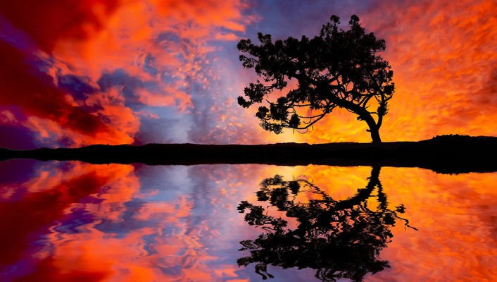 Landscapes reflections trees wallpaper