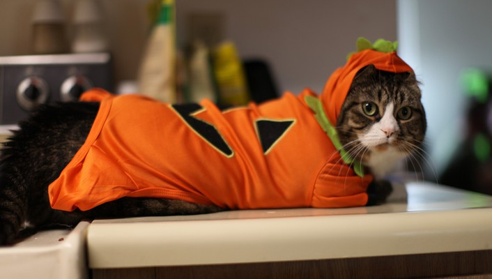 Kittys costume for halloween wallpaper