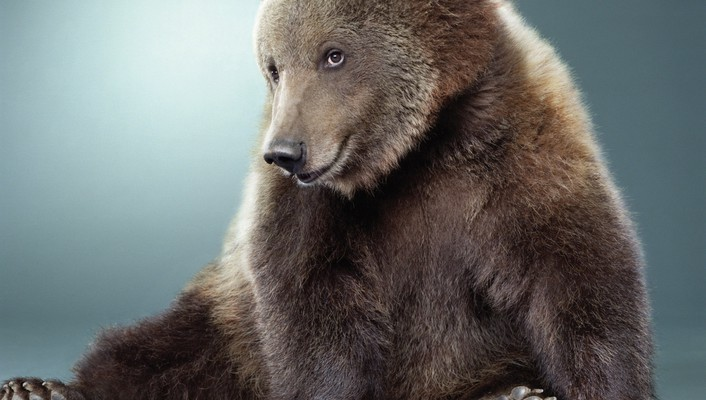 Animals bears funny sitting smiling wallpaper
