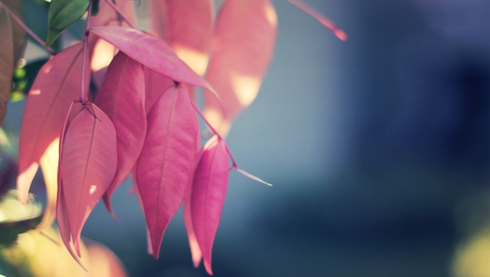 Leaves macro nature pink wallpaper
