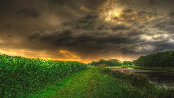 Corn fields hdr wallpaper