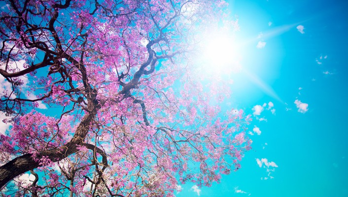 Blossom sun leaves pink trees wallpaper
