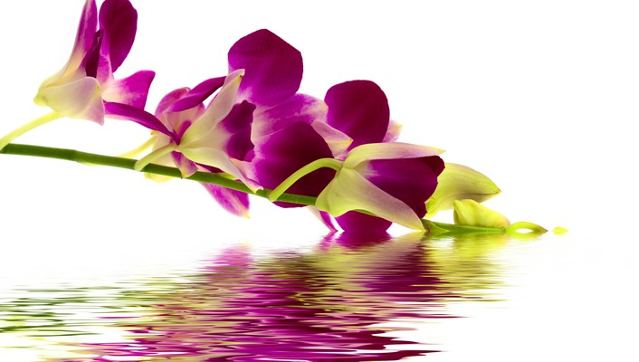 Reflection of beautiful flower wallpaper