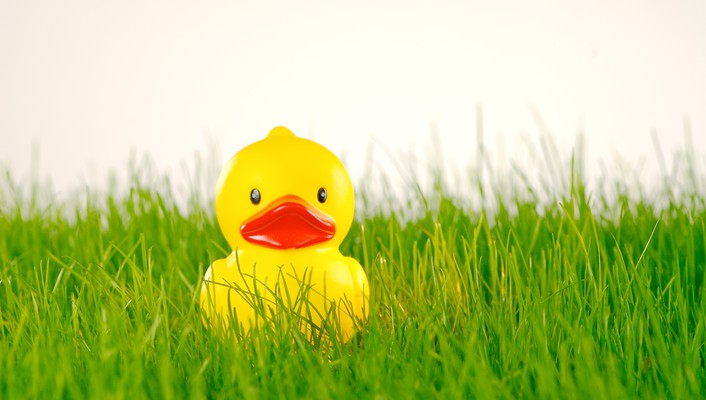 Rubber duck on grass wallpaper