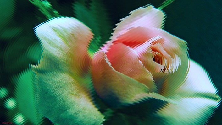 Curved rose wallpaper