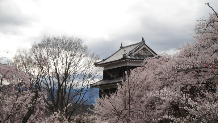 Japan castles cherry blossoms flowers sakura spring wallpaper