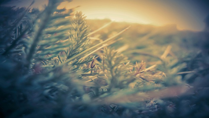 Closeup depth of field grass nature wallpaper