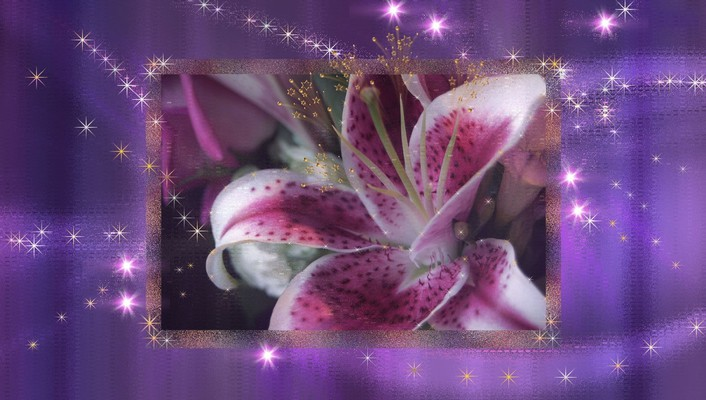 Stargazer lily wallpaper