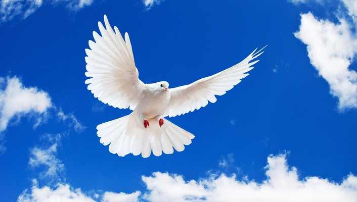 Birds animals skyscapes white dove wallpaper