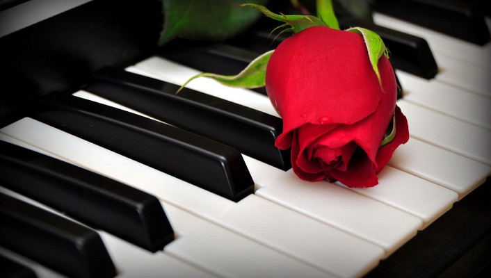 A rose on the piano keys wallpaper