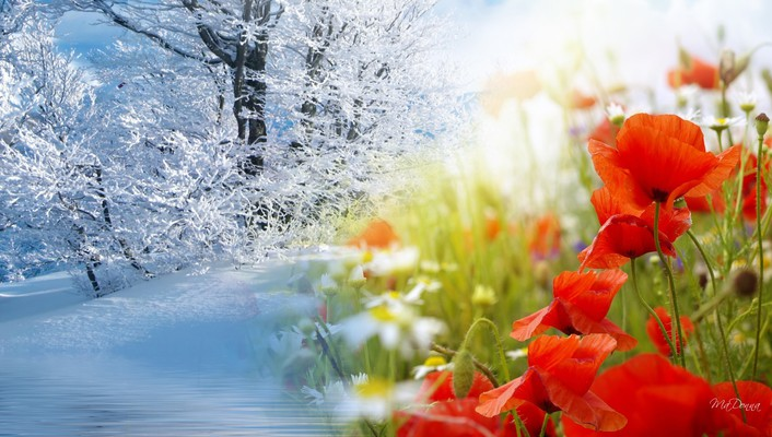 Winter into spring wallpaper