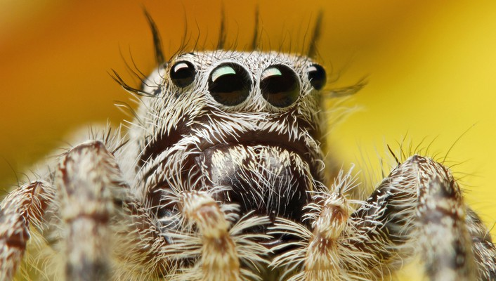 Animals spiders wallpaper