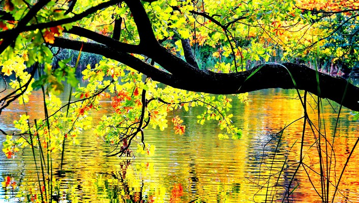 Autumn branches over the pond wallpaper